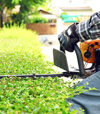 Services associés : jardinage et entretien espace vert